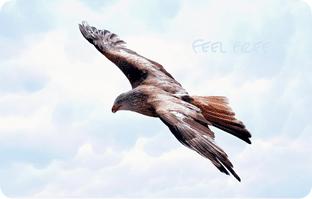 Blog_Freiheit